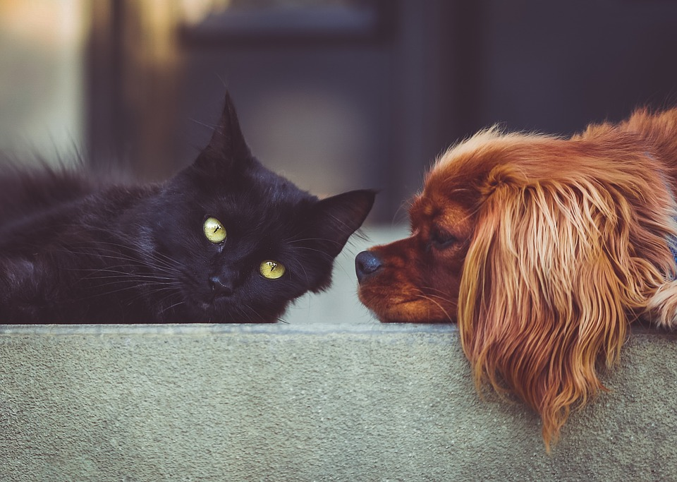 black cat and brown puppy laying next to each other